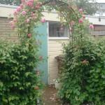 Romantische rozenboog met geurende roos