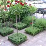 voortuin met buxusblokken en rozen op stam rivius tuinontwerp