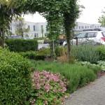 voortuin met vaste planten en geschoren ligusterblokken rivius tuinaanleg